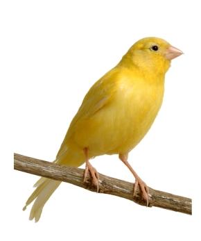 Foto del mio uccello