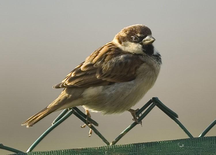 Uccelli sul terrazzo