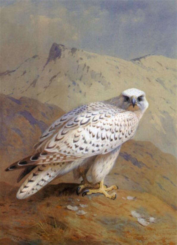 A_Greenland_or_Gyr_Falcon