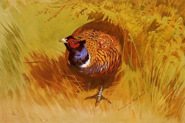 Thorburn_Archibald_A_Cock_Pheasant