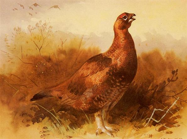 Thorburn_Archibald_Cock_Grouse
