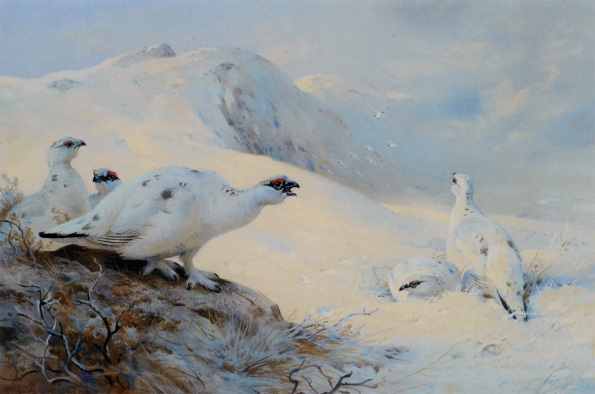 Thorburn_Archibald_Ptarmigan_calling_in_the_Snow_1926_watercolor_and_gouache-huge