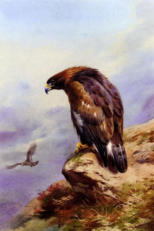 Thornburn_Archibald_A_Golden_Eagle